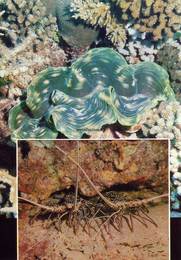 the world's coral reefs - Clams and lobsters.jpg